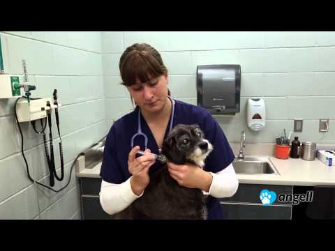 How to Administer a Tube Feeding to Your Pet