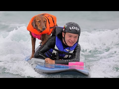 Ricochet The Surfing Dog: SUPERPOWER DOGS