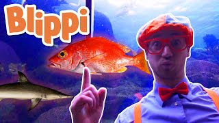 Blippi | Blippi Visits The Aqu…