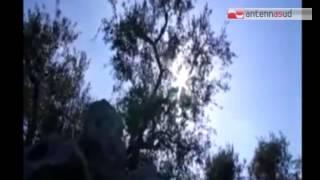 TG 09.02.15 Emergenza Xylella, Coldiretti chiede lo stato di calamità naturale