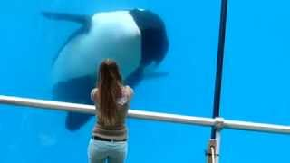 Orca Wikie and a girl
