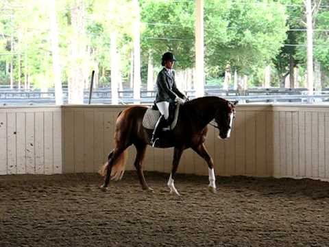 Rosall, Oldenburg Stallion, 2009 Advanced Stallion...