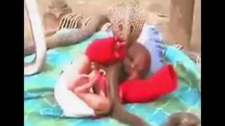Four deadly cobras protect a sleeping child