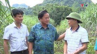 (TTV) Trang địa phương: Cẩm Thủy Phát triển mô hình trong sản xuất nông nghiệp