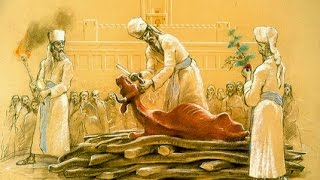 7-12 The Temple Institute Announces Red Heifers & Rebuilding The 3rd Temple!