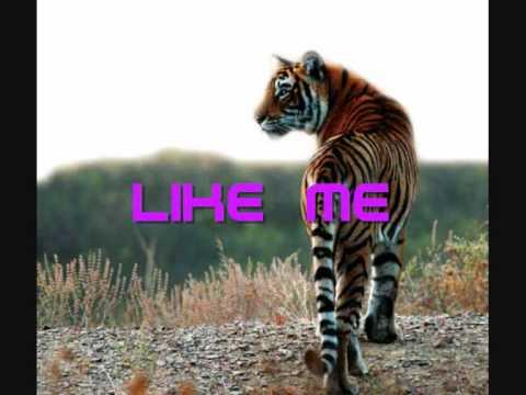 Party Animal - David Guetta Feat. Akon Lyrics