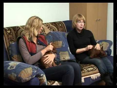 Карликовый пинчер: описание породы, как выглядит собака и уход