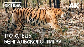 """Мир Приключений - Фильм: """"По следу Бенгальского тигра""""4К. Тигры в дикой природе Индии. Бандхавгарх."""