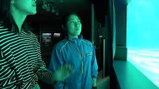 東京都品川区にある「しながわ水族館」からライブ中継。現在、休館中だが、イルカなどの動物や魚たちは元気いっぱい。 #しながわ水族館...