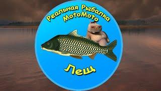 Как поймать Леща на Братском водохранилище NEW Реальная Рыбалка