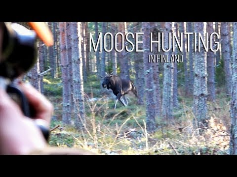 NH: Hirvijahti | Moose Hunting | 2019