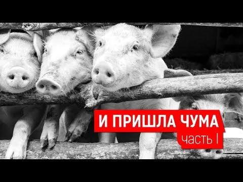 И ПРИШЛА ЧУМА. ЧАСТЬ I | Журналистские расследования Евгения Михайлова