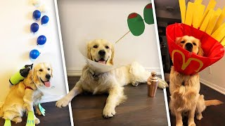 Dog's 'Cone of Shame' Turns Into Hilarious Costumes