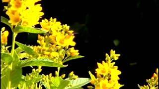Flowers - Omnia Wake Up