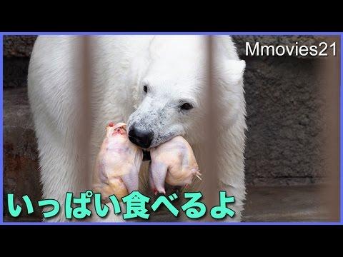 半身残して逃げるリラ たくさん食べる方法 Polar Bears eat the chicken