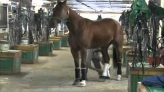 Training A Harness Horse