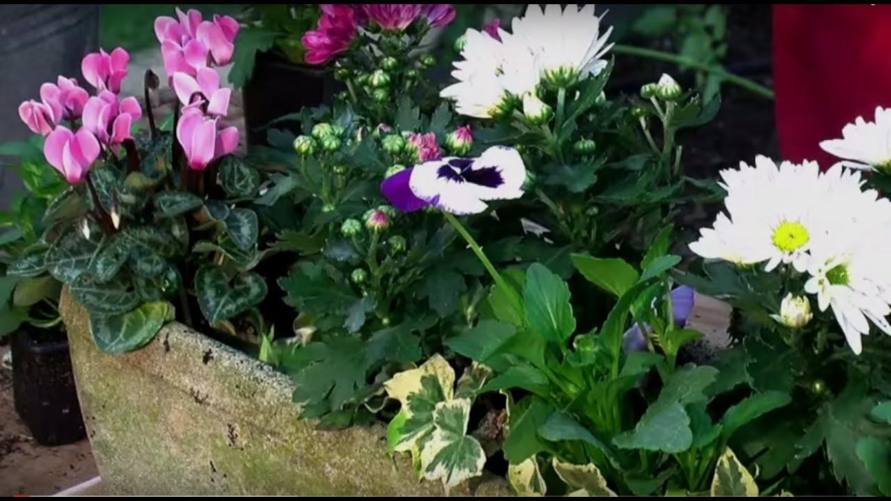 Cr er une jardini re d 39 automne youtube for Jardiniere d automne