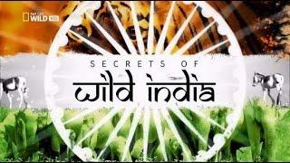 В царстве слонов  Тайны дикой природы Индии Фильм первый