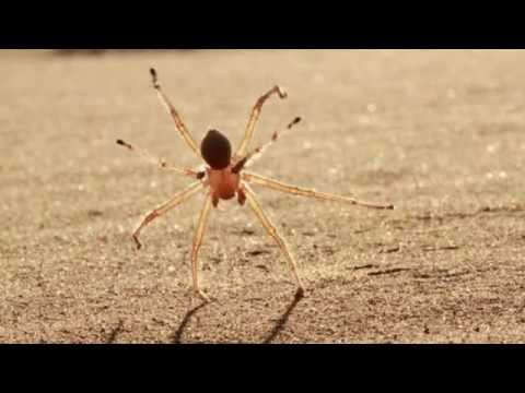 The Crazed, Somersaulting Spider of Your Dreams and Nightmares