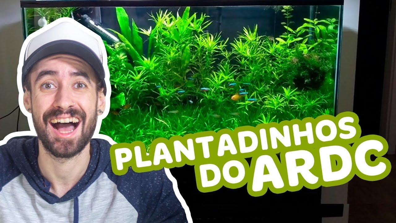 PLANTADINHOS DO ARDC - COMPILADO COLABORATIVO