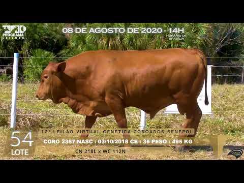 LOTE 53 CORO 2355