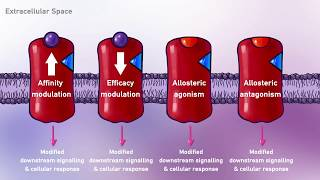 Pharmacodynamics, Types of Ligands (Agonist, Antagonist, Partial Agonist) DrugReceptor Interactions