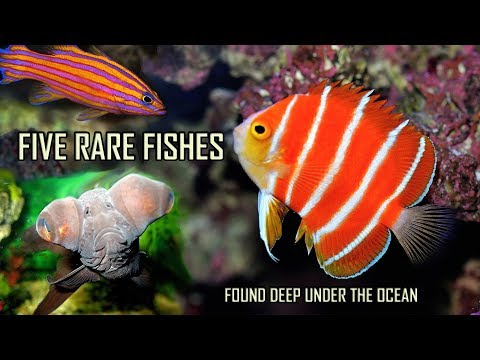 The most expensive and rare marine aquarium fish in the world