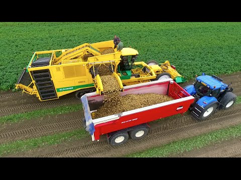 Potato Harvest | PLOEGER AR-4BX + Fendt & New Holland | Demi
