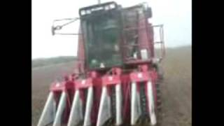 mccormick b 450 b 614 and cotton harvest part1