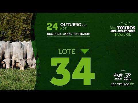LOTE 34 - LEILÃO VIRTUAL DE TOUROS MELHORADORES  - NELORE OL - PO 202