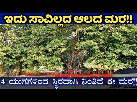 Akshayavat   Allahabad fort   Prayagraj   ಅಕ್ಷಯವಟ   ಅಲಹಾಬಾದ್ ಕೋಟೆ   ಪ್ರಯಾಗ್ ರಾಜ್