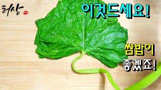 호박잎 어디에 쓰일까요? 손질 찌기 쌈밥으로 맛있게 드…