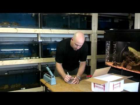 Packaging African Cichlids for shipping