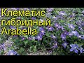 Клематис гибридный Арабелла. Краткий обзор, описание характеристик, где купить крупномеры, саженцы