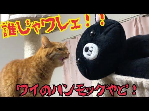 【ドッキリ】寝床のハンモックに猫をぶち込んでみた!