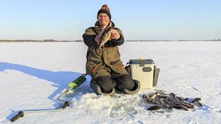 Дядя Фёдор ловит окуня в полном одиночестве Зимняя рыбалка не закончилась