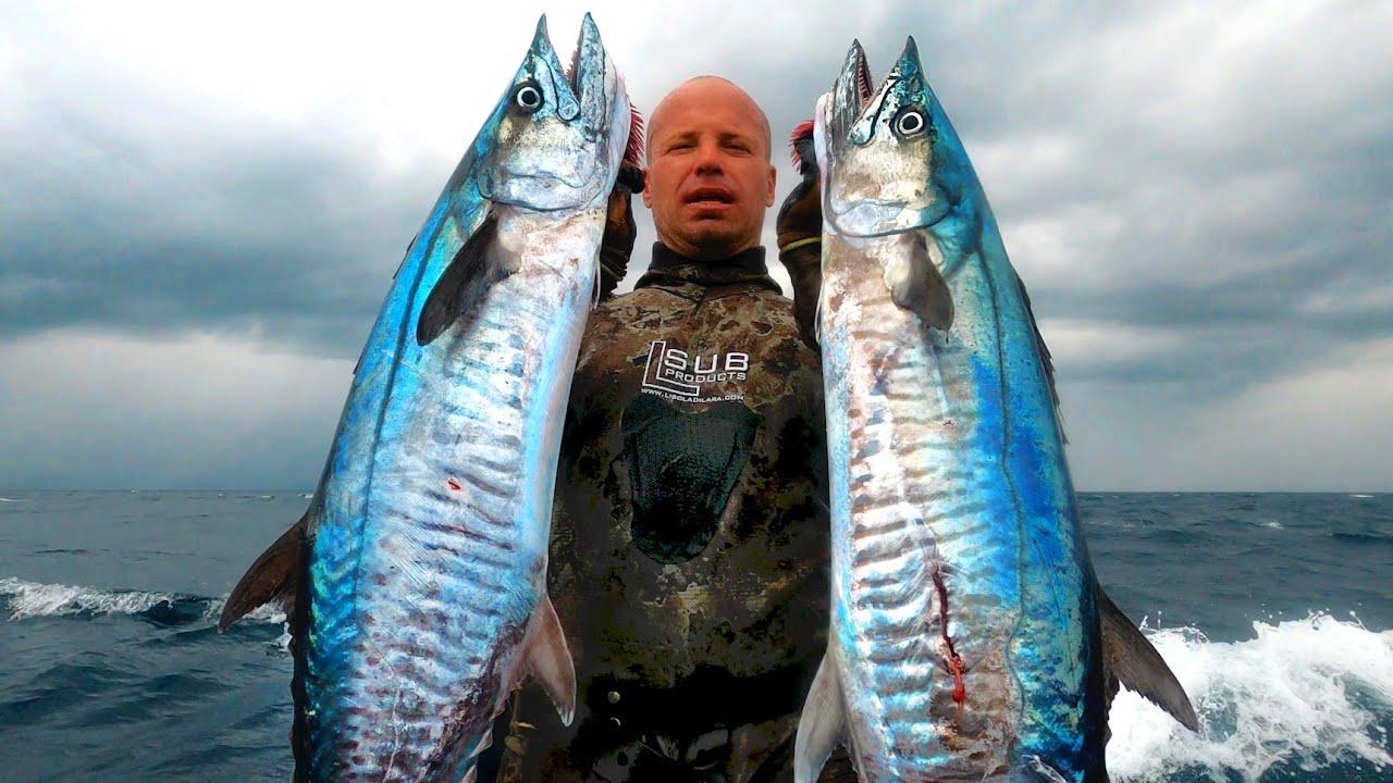 Download INDO TALES - EPISODE 33 Double spanish mackerel