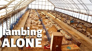 why-i-ve-been-lambing-alone-vlog-201