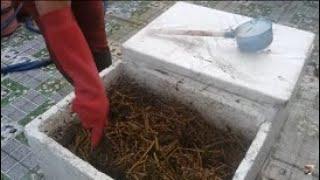 Chia sẻ cách ủ phân hữu cơ , đất mùn , nhanh nhất từ dây Mướp | Khoa Hien 249