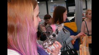 Пепа - звезда с розовым чубчиком.