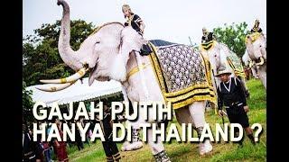 Video TAHUKAH KAMU KENAPA THAILAND DISEBUT NEGARA GAJAH PUTIH ? download MP3, 3GP, MP4, WEBM, AVI, FLV November 2019
