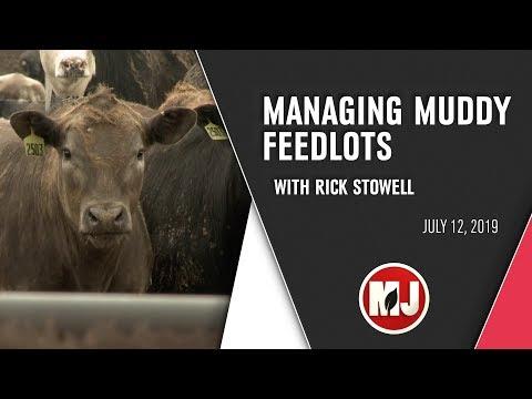 Managing Muddy Feedlots | July 12, 2019