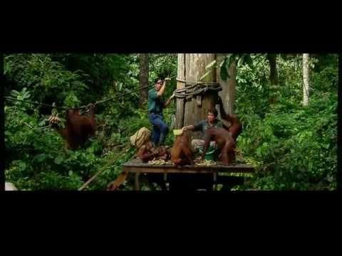 Orangutan Feeding Centre - Sepilok Orang Utan Rehabilitation Centre