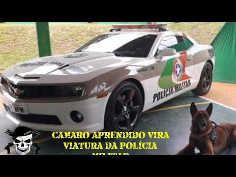 CAMARO APRENDIDO VIRA VIATURA DA POLÍCIA MILITAR EM SC.