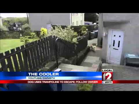 The Cooler: Dog uses trampoline to escape backyard and follow owner