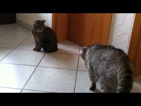 Jenny & Roki kämpfen ( Mops pug Vs Mischling) Das kennenlernen Teil 1 von YouTube · Dauer:  1 Minuten 49 Sekunden