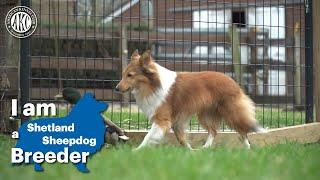 I am a Shetland Sheepdog breeder