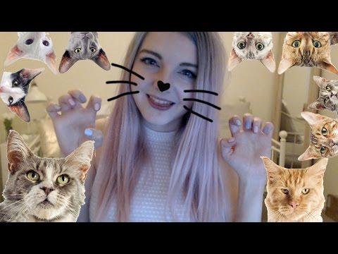 Crazy Cat Lady Simulator!