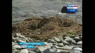 Экологическая катастрофа на Байкале. О чём говорят гниющие водоросли?,