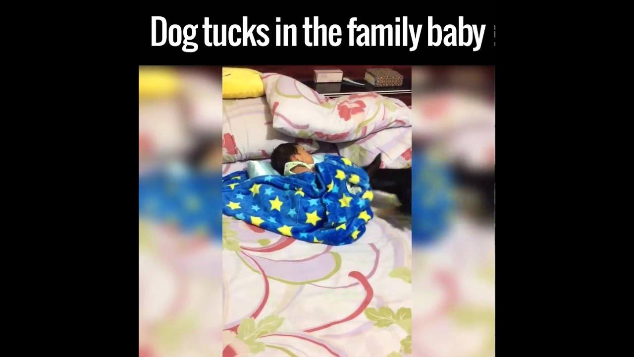 Dog Tucks Baby